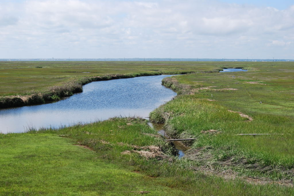 Tidal Gut and Salt Marsh