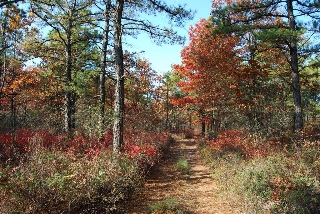 Oak-Pine Forest