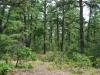 Pine - Oak Forest