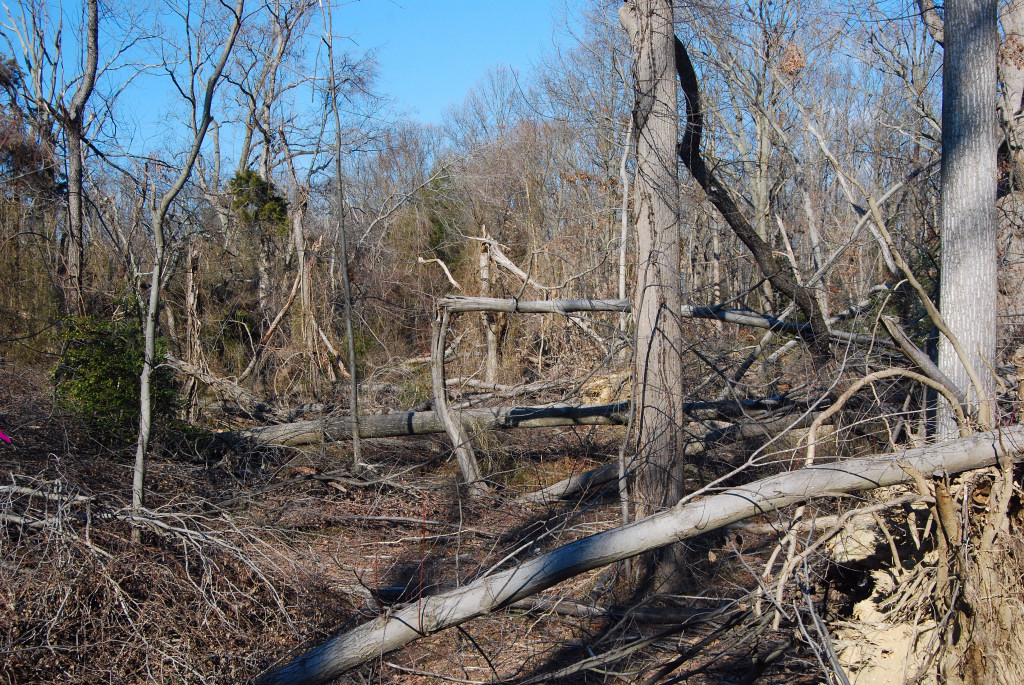Forest destroyed by tornado