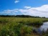 Maurice River Freshwater Marsh