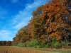 Autumn in Gloucester County, NJ