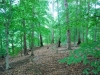 Beech Mixed Hardwood Forest