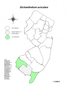 dichanthelium aciculare Atlas map