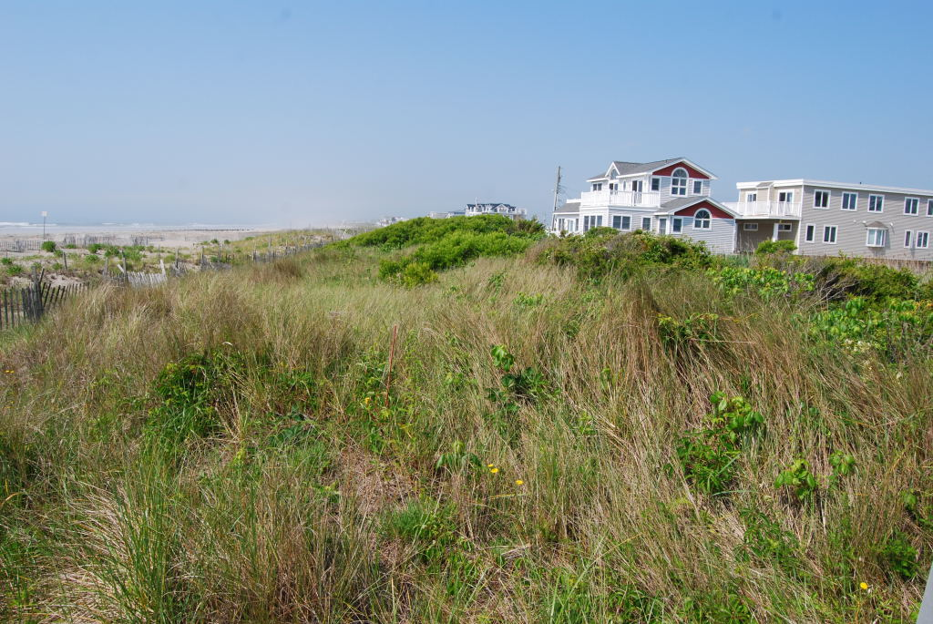 Fore Dune Complex