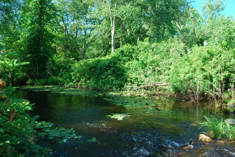 Still Run, Maurice River