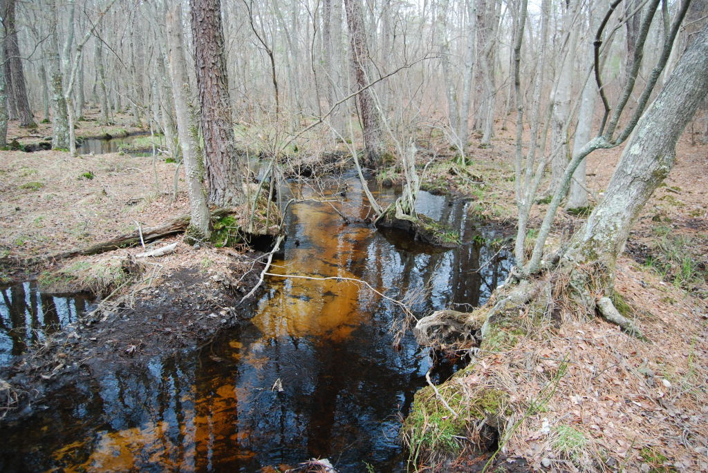 South River headwaters, Mays Landing