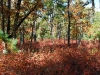 Upland Oak-Pine Forest