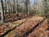 Outer Coastal Plain Mixed Oak Forest