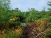 Shrub Habitat Menantico Creek Vineland