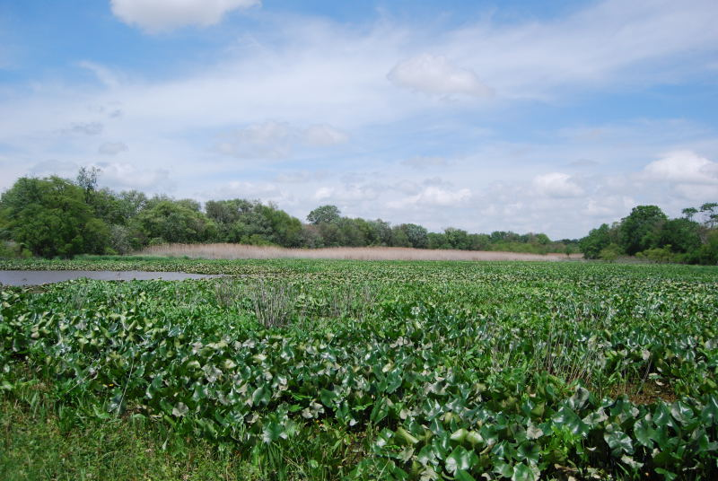 Mannington Creek Freshwater Marsh