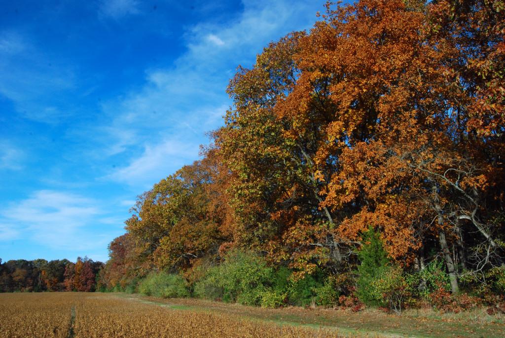 Autumn in Gloucester County, NJ