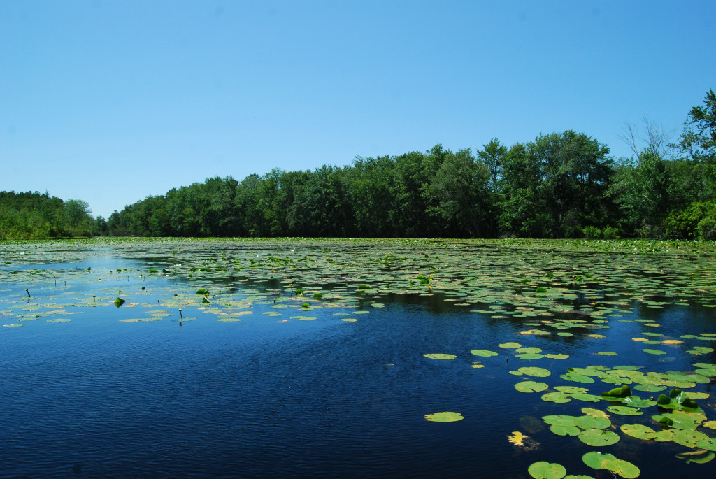 Victory Lake, Cecil, Monroe Twp Gloucester Co