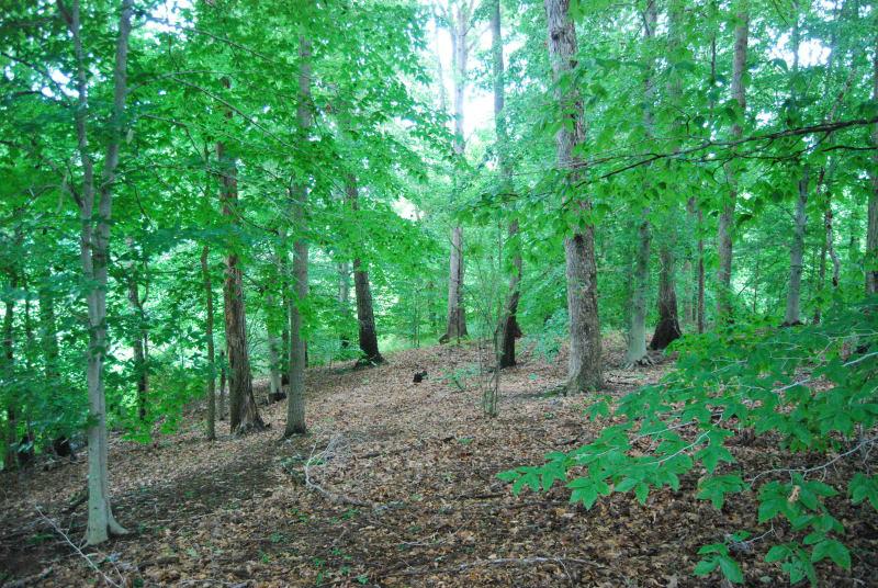 Beech Mixed Hardwood Forest