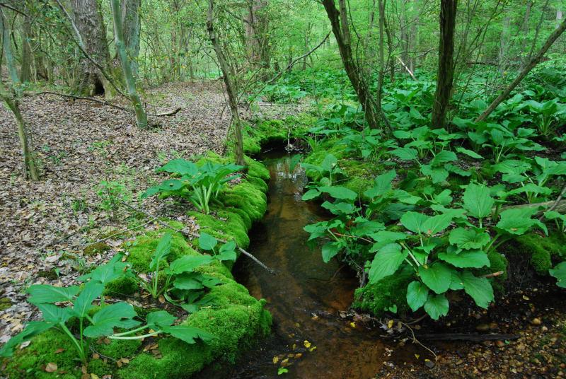 Porch Branch-Mantua Creek