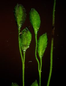 <p>Guess This Plant</p>